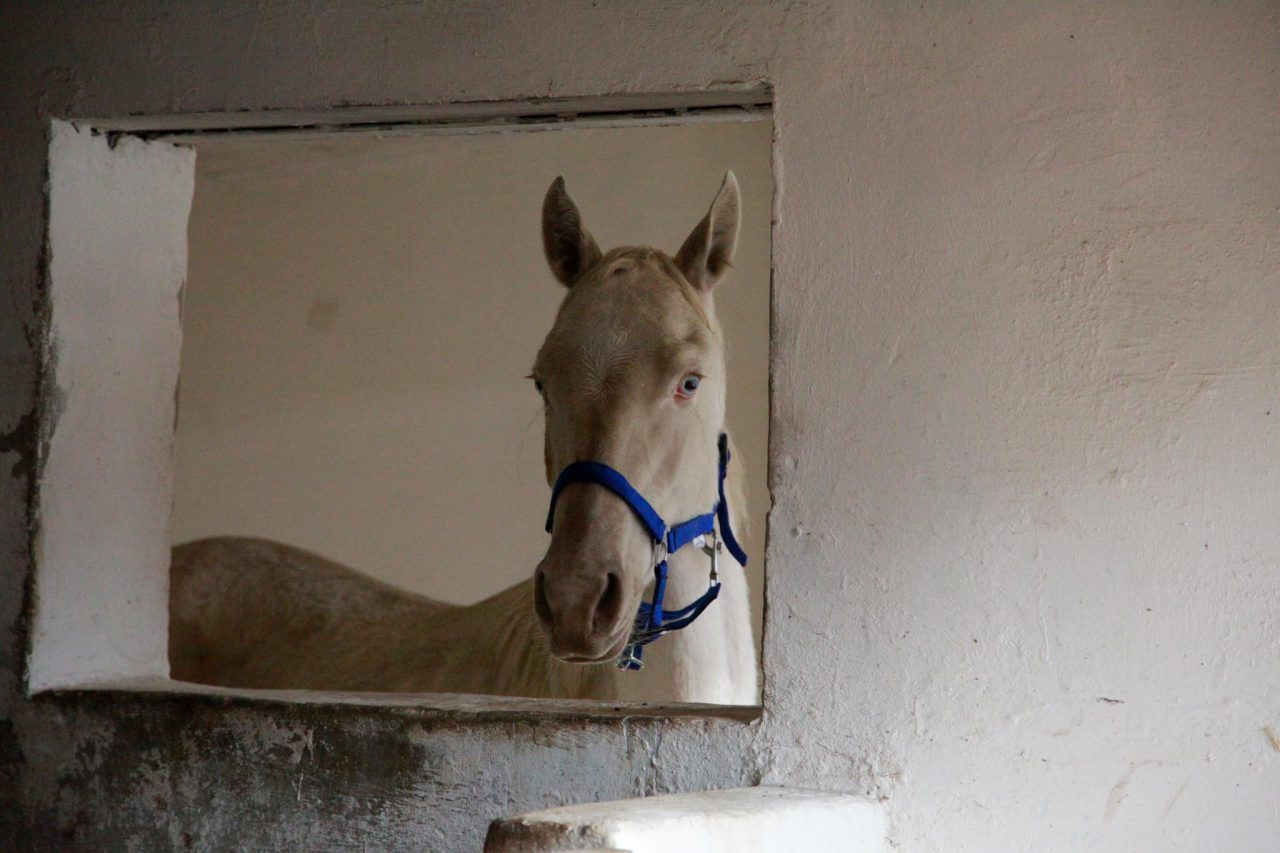 Photography Horse, 2012