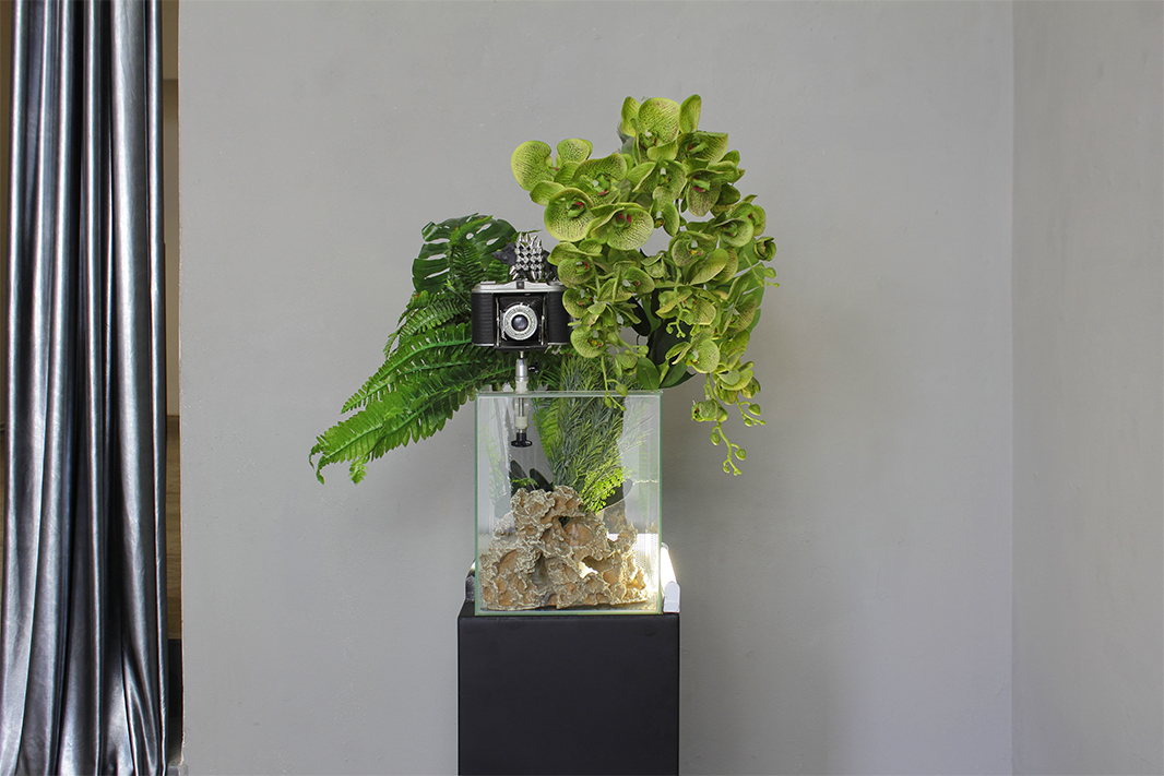 Art work 'PLANT OF JUSTICE'