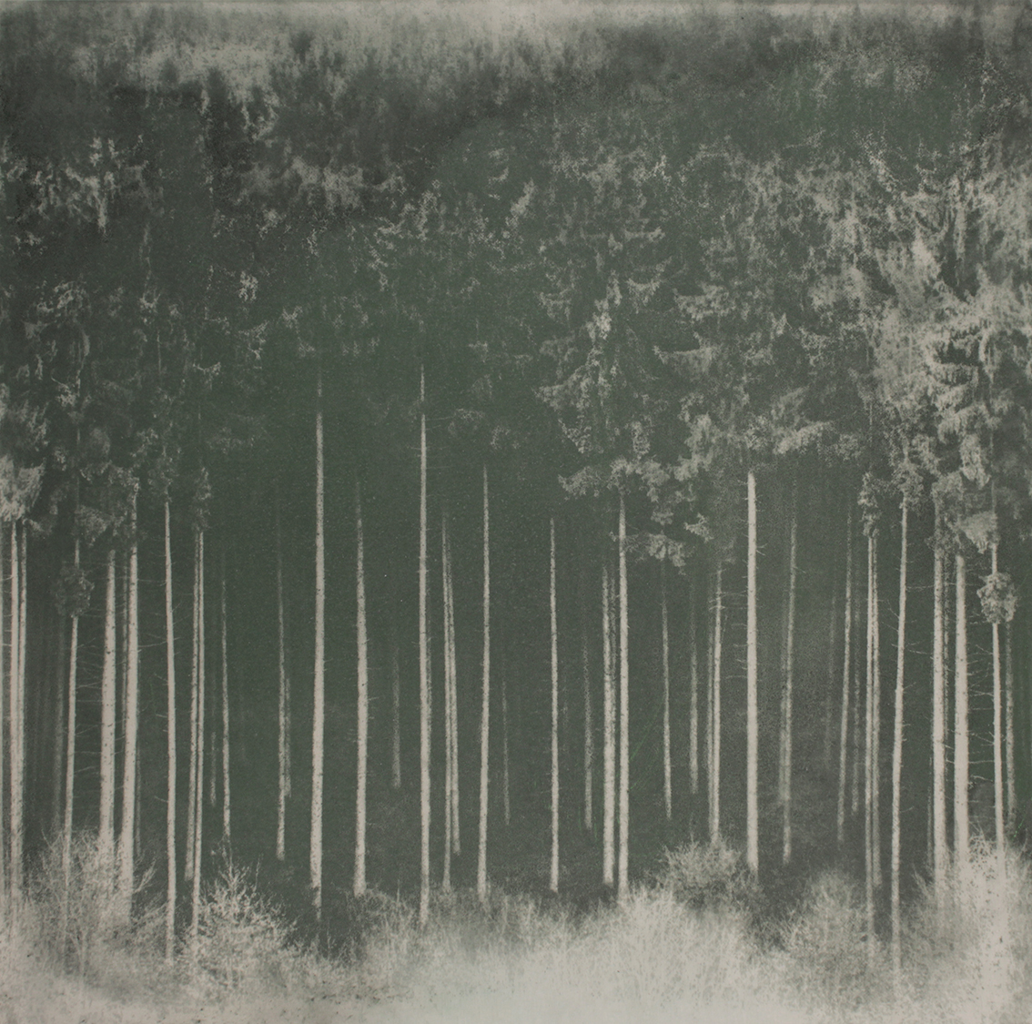 Eternal Forrest- graphite and pigment on canvas (100cm x 100cm)
