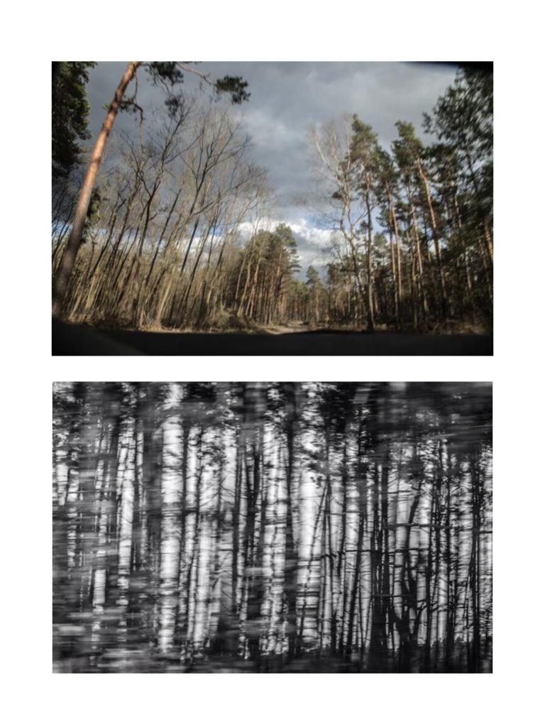 Landscape, 100x80cm, Hahnemühle Photorag, 2017, 2017