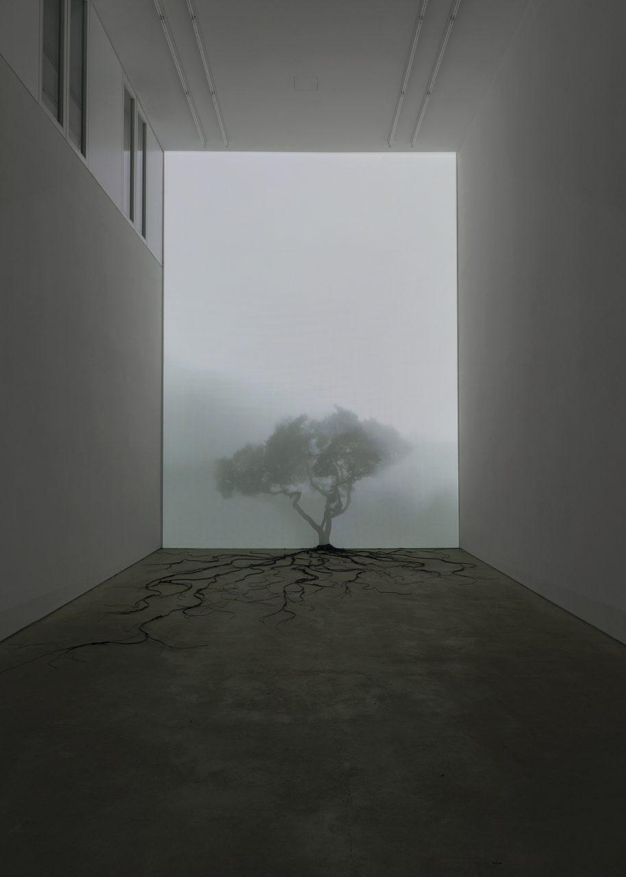Limbs, Installation, RotwangHaus, Berlin, 2019