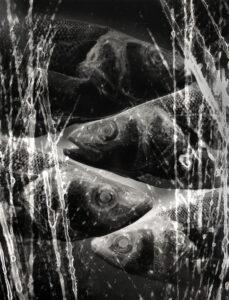 Fish 13 | Csilla Szabo | available artwork