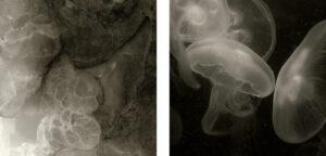 Mimesis #2 – diptych | Gabriela Torres Ruiz | available artwork