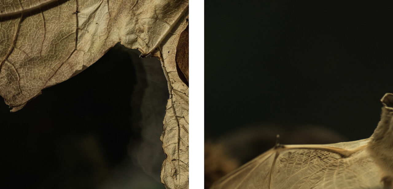 #7 from the series Mimesis (diptych)